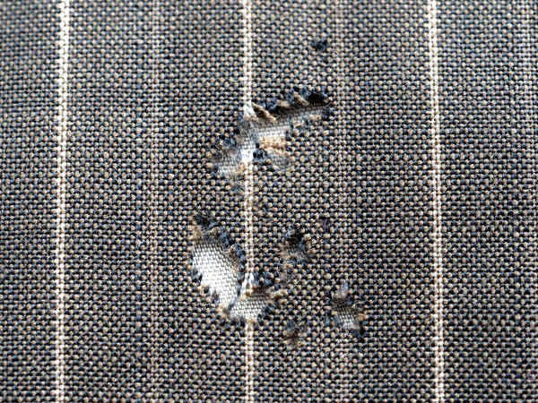 Hole in fabric eaten by clothing moth larvae