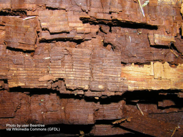 Wood damaged by cubical wood rot